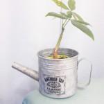 100円ショップガーデニング・園芸用品の観葉植物とおしゃれな鉢