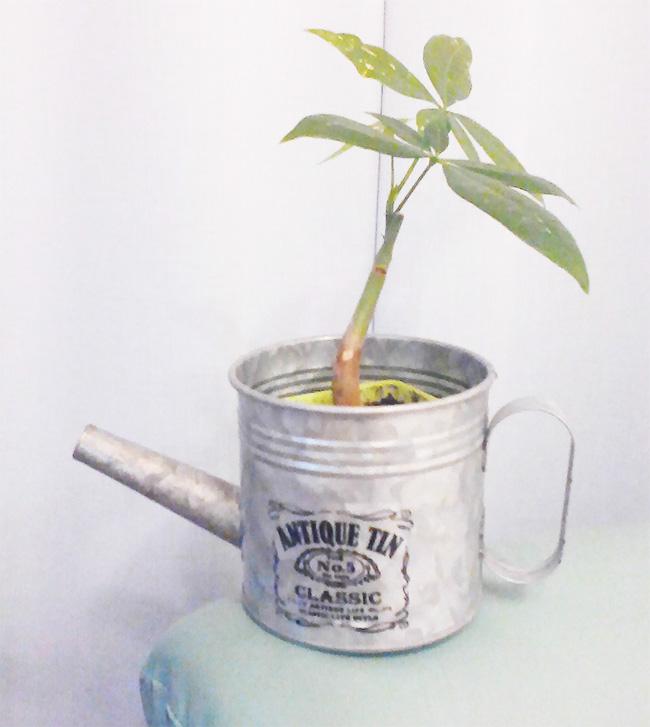 百均の観葉植物とおしゃれな鉢