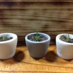 100円ショップガーデニング・園芸用品のコンクリート鉢